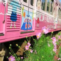 「ちびまる子ラッピング電車」とコスモス (2015年10月25日)