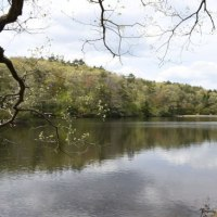 第28回鯉が窪湿原まつり 平成29年5月3日(水)