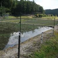 水を張り、植代作業の開始