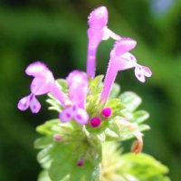 デジブック 『富岩運河右岸の花々』