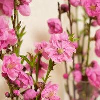 桃の花(愛だよ愛)