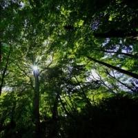 緑の鮮やか(超広角10ミリレンズで撮った赤塚植物園)