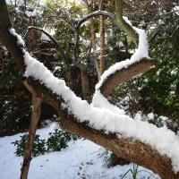 雪が降った~(^◇^;)/