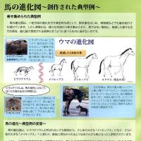 馬は進化したのか?