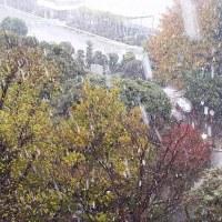 11月に都心で雪!