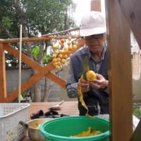 リハビリに柿剥き