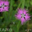野に咲く花 鳴沢