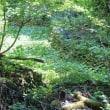 大楢峠 海沢三滝・探勝路 神苑の森