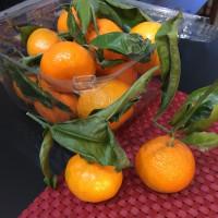 蜜柑の季節