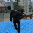 今日は「犬の整体Day」! 犬のしつけ教室&犬の幼稚園@アロハドギー