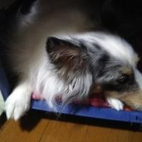 疲れちゃった! byレオ