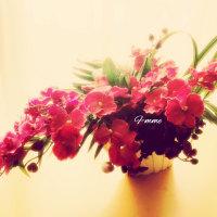 ◎ピンク系グラデの大きめ蘭のアレンジ◎