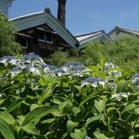 第159回古都旅歩き 藤森神社、海宝寺、中書島