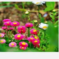 花さんたちの午前