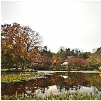 玉泉館跡地公園の紅葉・・・。
