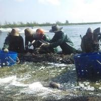 養殖業者らはその事業慣行を浄化しようとしている  中国 (1)