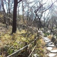 鎌倉市・大船植物園で剪定見物 その2