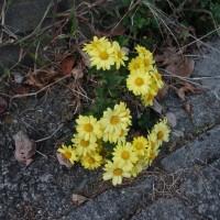 路上の花(2)