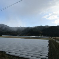 1月23日の散歩 雪が!