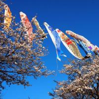 青空に泳ぐ☆高根沢町・塩谷郡・栃木県から