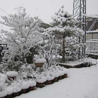 昨日よりも大雪!!