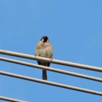 4/25 チータンが来て、何か言っていた もう1羽は隠れていた