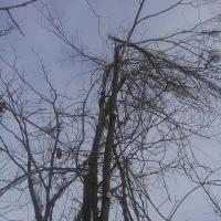 木とサルナシの話