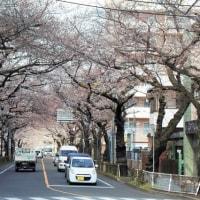 2017.04.03 三鷹の桜見物