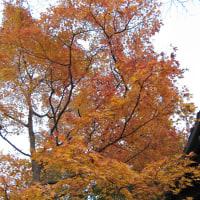 箱根美術館で紅葉狩り