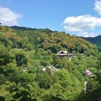 新緑の長谷寺