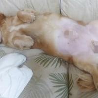 バーディー寝んこ!