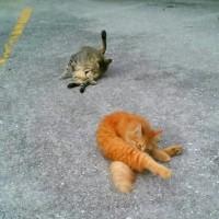 猫ちゃんにとっても良いお天気になりました