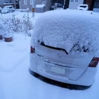 161125 朝から雪