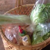 元気な野菜たち