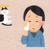 大正動物医療センターニュースレター 【2016年2月号】