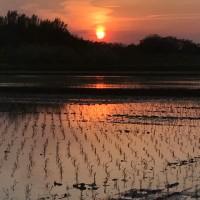 火の鳥のような雲と夕映えの田んぼ