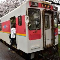 桜の駅4・・・【いな】