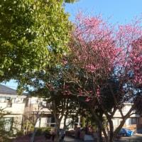 秋の道 梅の花