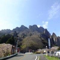 平成29年4月26日(水) 桜さくら♪ ③