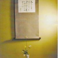 ★福岡の結婚相談所・淡斎会・茶花展のご案内★