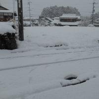 今朝も雪2