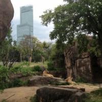 新世界&天王寺動物園へ行きました。