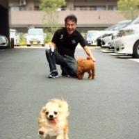 『モデル犬☆リンくん』