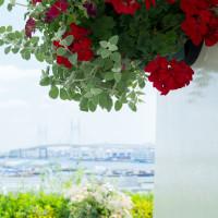港の見える丘公園 ローズガーデン 2017/05/28
