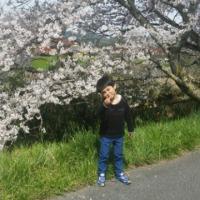 法勝寺の桜