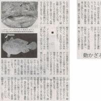 #akahata 動かざること岩のごとし/ゆかいなお魚たち⑤ 松浦啓一・・・今日の赤旗記事