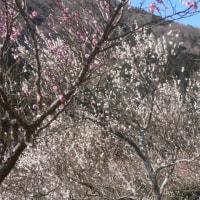 スポコミ・カワラ版 3月26日(日)赤口