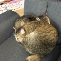 座椅子に2人で。