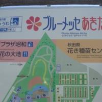 日本国花苑の桜