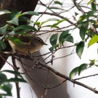弘法山公園の早春 2017年3月